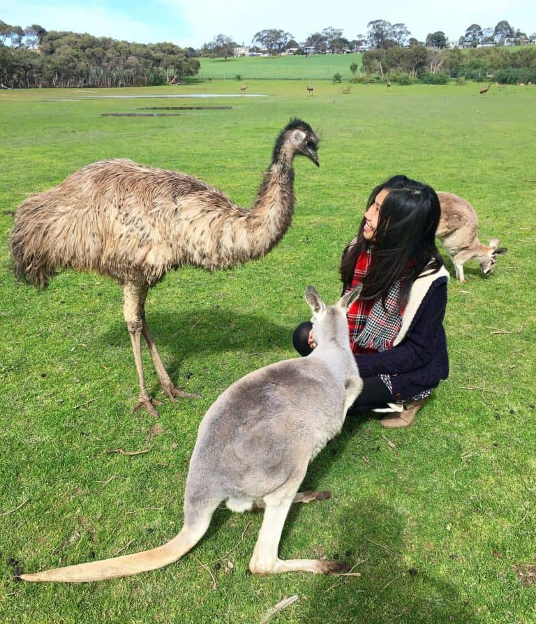 Estella kneels and pets a kangaroo with a emu standing next to them